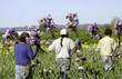 canvas print picture - iris gardens