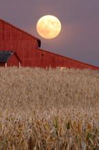Harvest Moon Rising Over Barn