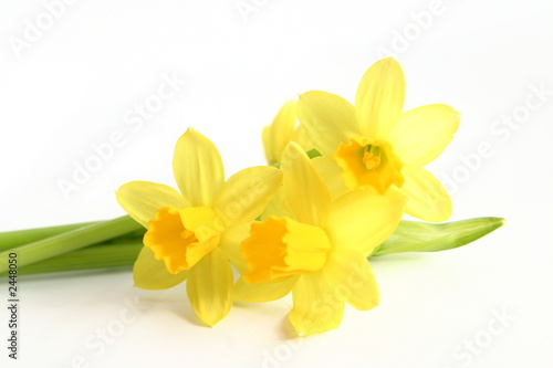 Photographie  daffodils