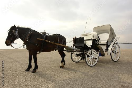 Fotografie, Obraz  horse-car