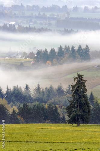 Obrazy krajobraz  winnica-jesienia-z-jodly-i-mgly
