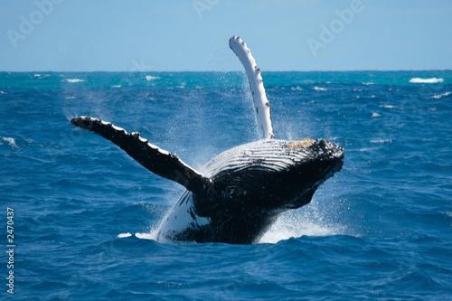 Photo  granville whale 2