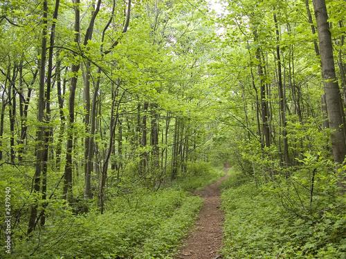 Fényképezés appalachian trail