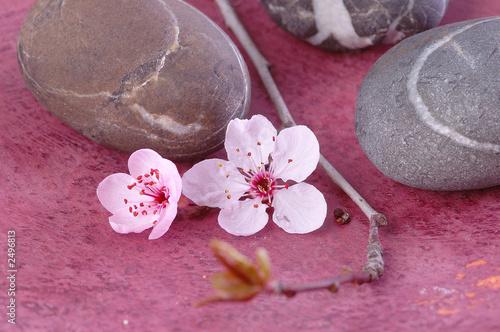 Foto op Canvas Zen zen