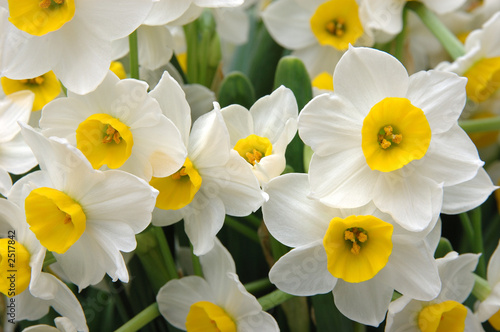 Cadres-photo bureau Narcisse white daffodils