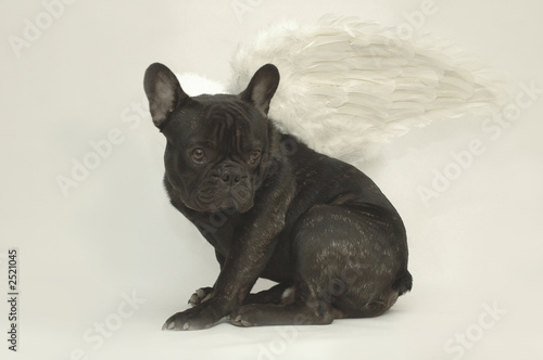 Chien Volant chien volant - buy this stock photo and explore similar images at