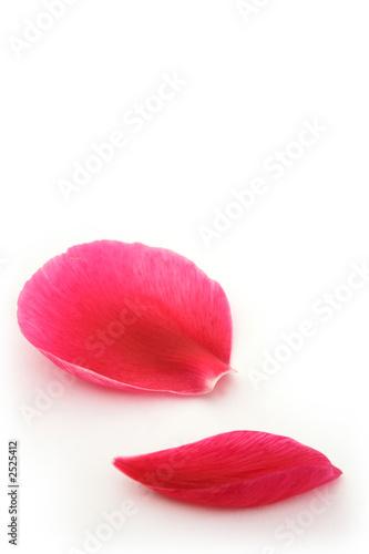 Fotografía  fallen petals