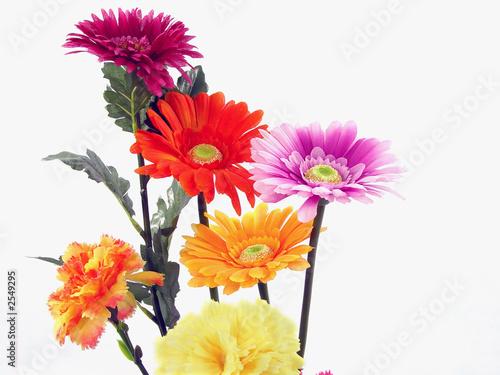 Fototapeta flower close-up obraz na płótnie