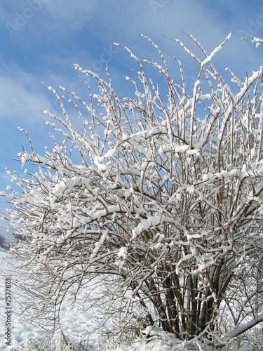 Fototapeten Natur shrub in winter