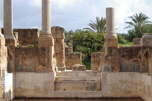 colonnes et palmiers à leptis magna