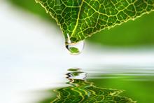Leaf Droplet Over Water