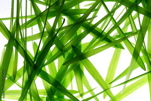 Fototapeta liście   liscie-trawy