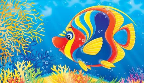Foto-Stoff - coral fish (von Alexey Bannykh)