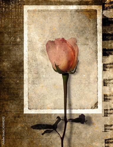 grunge rose postcard #2604292