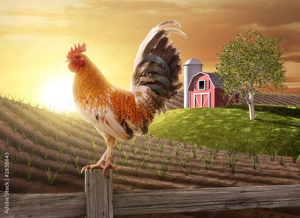 Fototapeta farm fresh morning