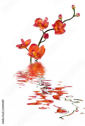Foto-Lamellen - orchid