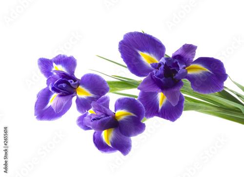 Deurstickers Iris flower