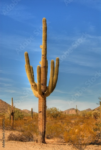 Papiers peints Cactus desert saguaro 37