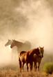 canvas print picture resting horses
