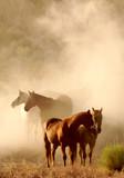 Konie w kurzu