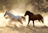 Fototapeta Konie - running free