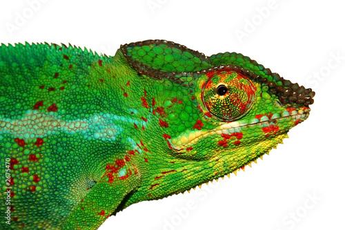 Staande foto Kameleon caméléon sur fond blanc