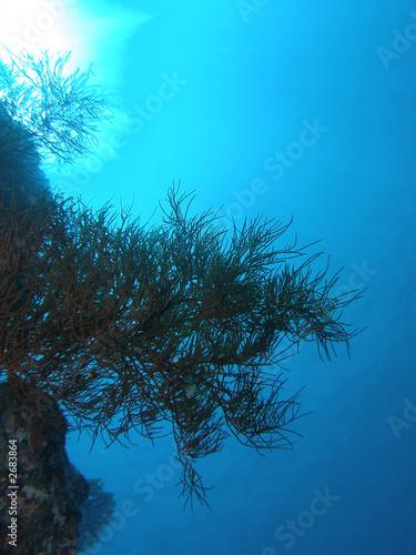 Papiers peints Turquoise paysage sous marin
