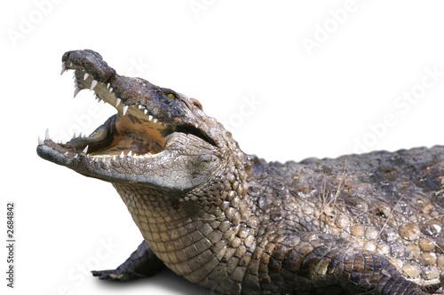 Foto op Aluminium Krokodil crocodile sur fond blanc