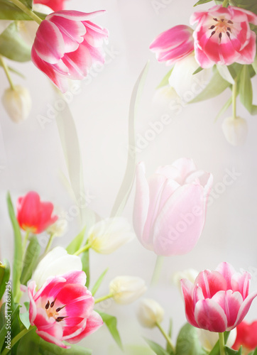 Foto-Duschvorhang - tulip's vertical background