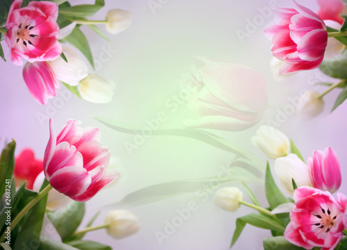 Doppelrollo mit Motiv - tender floral background