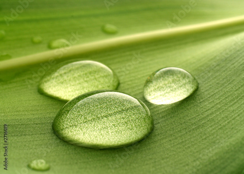 Doppelrollo mit Motiv - water drops