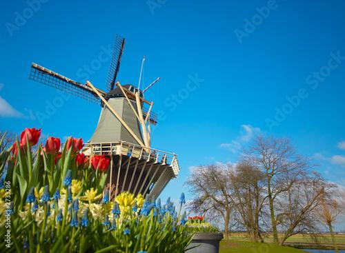 Plakat holenderski wiatrak i tulipany