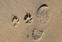 A Foot Print And Dog Paw Print...