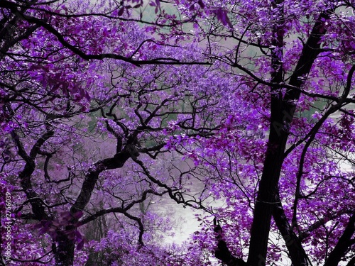Deurstickers Zwart purple spring