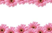 Pink Flowers Border
