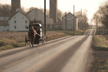 Amish Horse And Buggy, Sepia T...