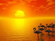 Sunset And Flamingos