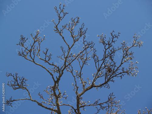 "Fotografie, Obraz  ""trees"": magnolia buds and nest in blue sky"