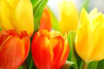 Panel Szklany Podświetlane Tulipany tulips
