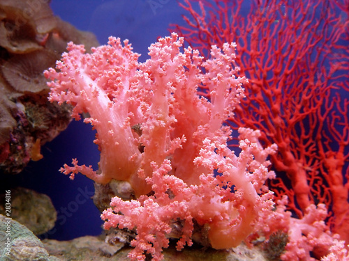 Tuinposter Onder water beautiful coral