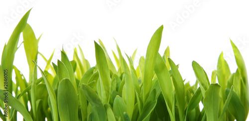 Photo plantas frescas