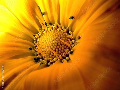 Obraz na plátně  inside flower with bugs