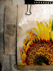 Panel Szklany Grunge grunge sunflower