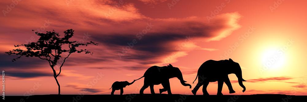 Fototapeta family of elephants