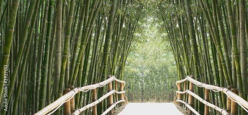 Foto op Canvas Bamboo bambusallee
