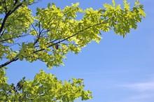 Tree Branch On Blue Sky