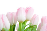 Fototapeta Tulipany - bouquet of tulips