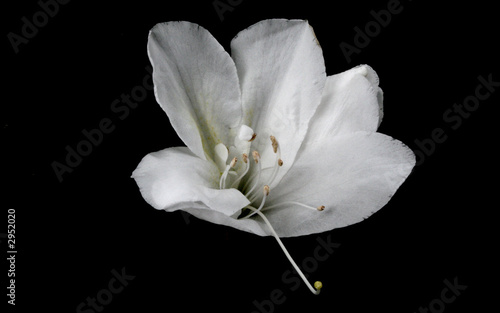 Fleur Blanche Buy This Stock Photo And Explore Similar Images At