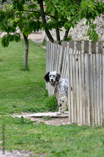 Tela  perro en jardin