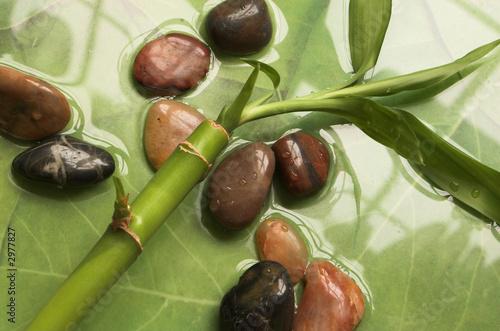 roslina-bambusowa-i-kamyki-na-wodzie